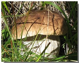 Da un fungo di piedi la migliore medicina
