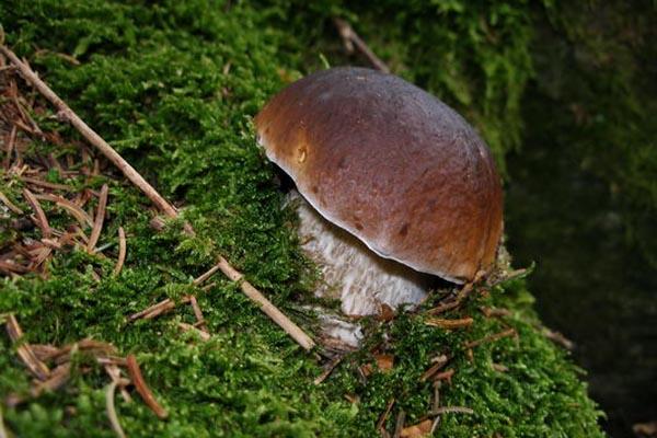 Trattamento complesso di un fungo di piedi