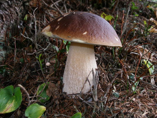 Che il fungo di unghie uccida
